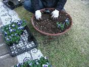 ガーデンチャペル、カサミエントの花を入れ