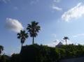 庭から西.JPG