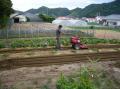 自家菜園.JPG